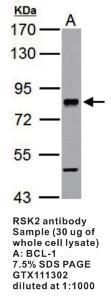 Anti-RPS6KA3 Rabbit Polyclonal Antibody