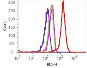 Anti-NAMPT Rabbit Monoclonal Antibody [clone: 13H13L23]