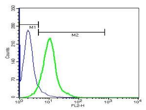 Anti-TSPAN16 Rabbit Polyclonal Antibody