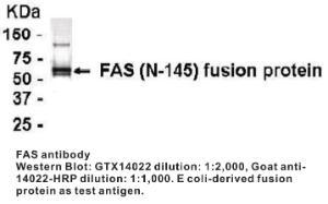 Anti-FAS Chicken Polyclonal Antibody