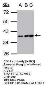 Anti-CD14 Rabbit Polyclonal Antibody